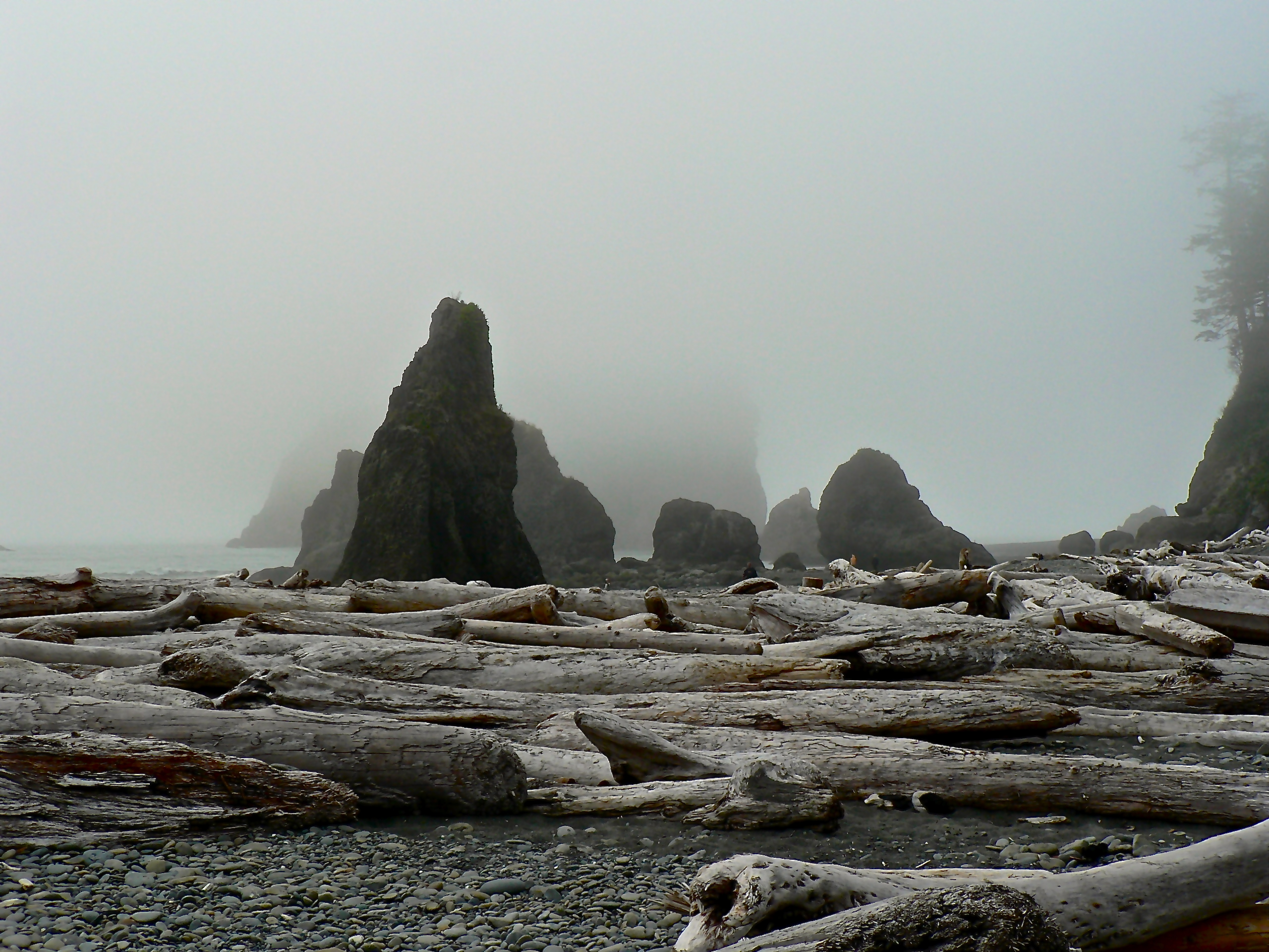 Mist covers the rock formations of Ruby Beach Olympic National Park in Washington